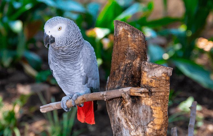 Рекомендации по уходу и содержанию попугая жако
