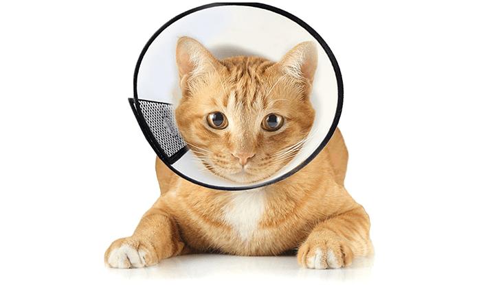 Воротник для кошки - главное фото