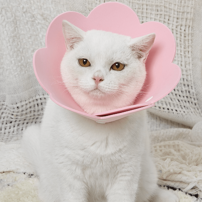 Воротник для кошки своими руками