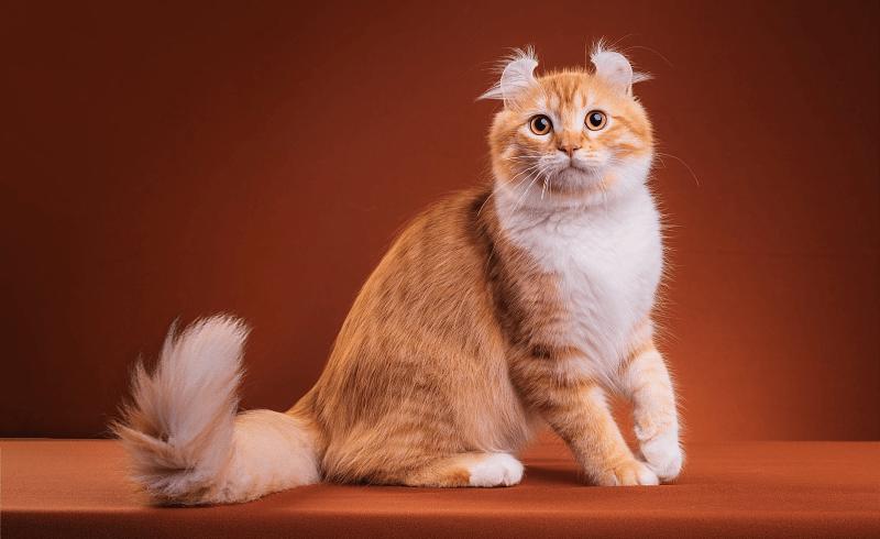 Зачем кошкам хвост - главное фото