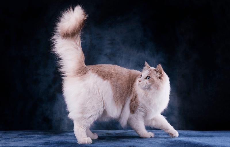 Зачем кошкам хвост - функции