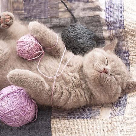 5 познавательных фактов о кошках, которых вы до сих пор не знали
