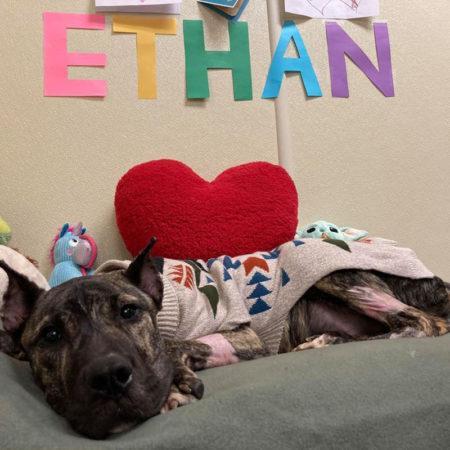 Собачья жизнь и работа: Итан, дегустатор пива