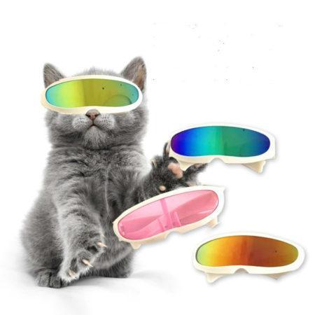 АлиЭкспресс для кошек: покупаем солнцезащитные очки