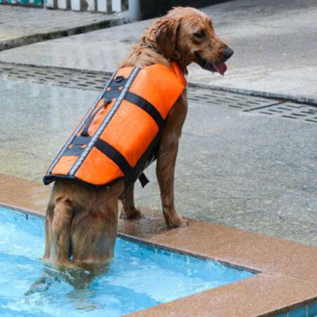 АлиЭкспресс для животных: спасательные жилеты для собак