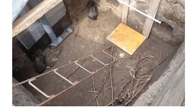 01 - дом для кролика