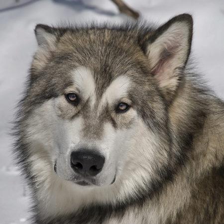 Знаете ли вы, откуда взялись названия пород собак и что они обозначают
