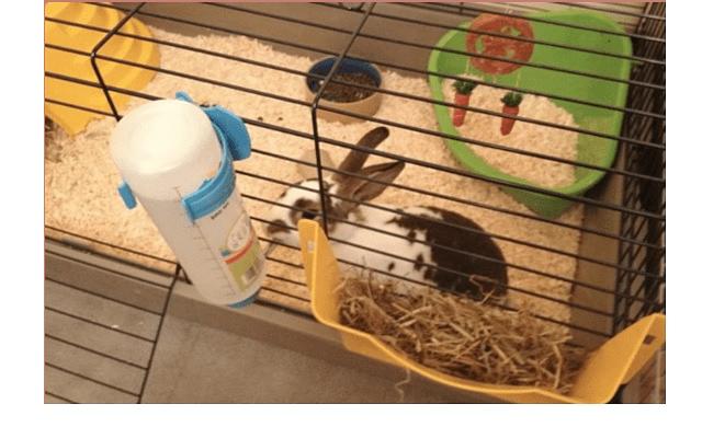 021 - дом для кролика