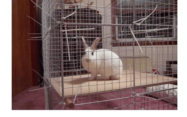 026 - дом для кролика