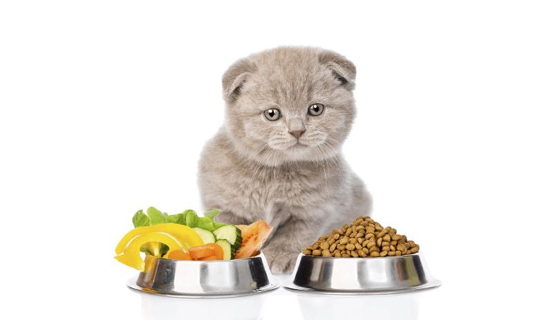 Чем кормить котенка в 3-4 месяца - главное фото