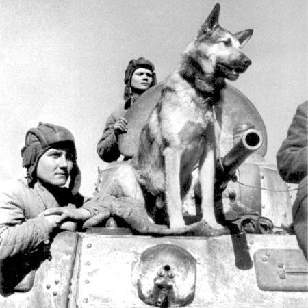 Собаки – герои войны: Дик, Дина и Джульбарс