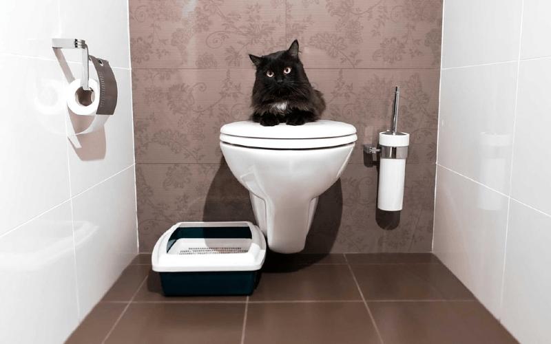 Как приучить кота к унитазу - главное фото