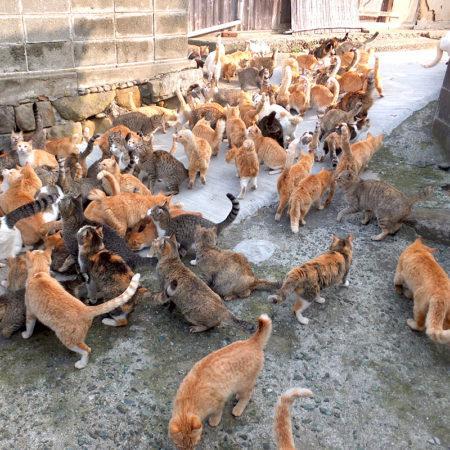 Кошачьи острова: новый клочок суши в океане, на котором обосновались кошки
