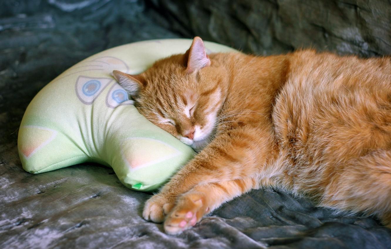 Усыпление кошки в домашних условиях
