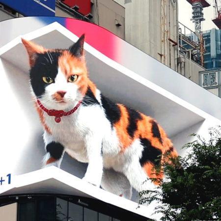 Сотни тысяч японцев следят за жизнью гигантской трёхцветной кошки