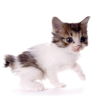 4 факта о кошачьих хвостах и связанные с ними подробности