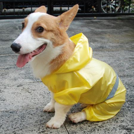 Какой дождевик выбрать для собаки на АлиЭкспресс: обзор новинок
