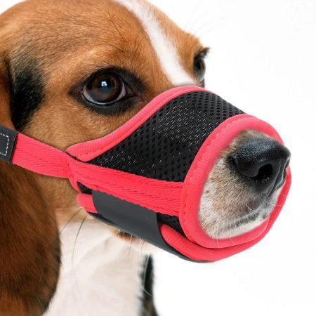 АлиЭкспресс для собак: рекомендуем приобрести намордник