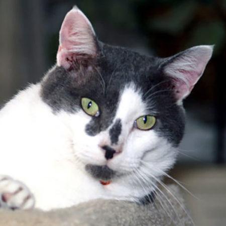 3 фантастические истории кошек-предсказателей, случившиеся в реальной жизни