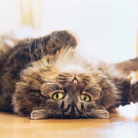 4 примера поведения кошек, которые нужно знать