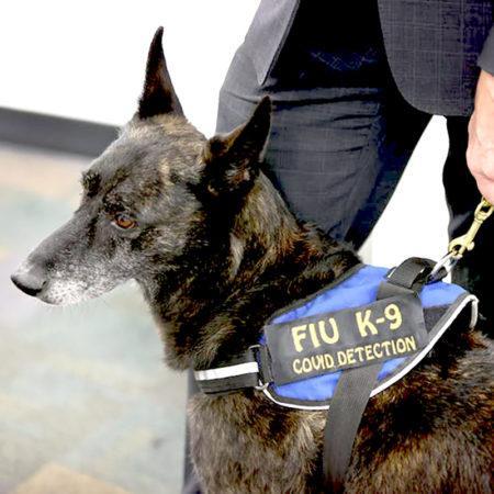 Новые собачьи профессии: COVID-детектор
