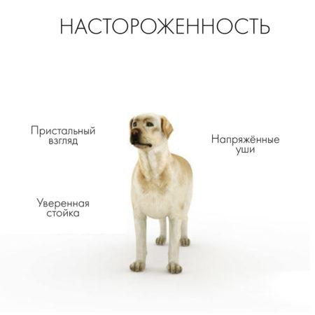 Язык тела у собак: что хочет сказать ваш питомец