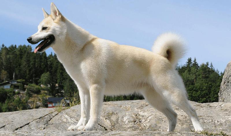 Ханаанская собака - главное фото