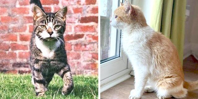 2 кошки, которые всё-таки вернулись домой после длительного отсутствия