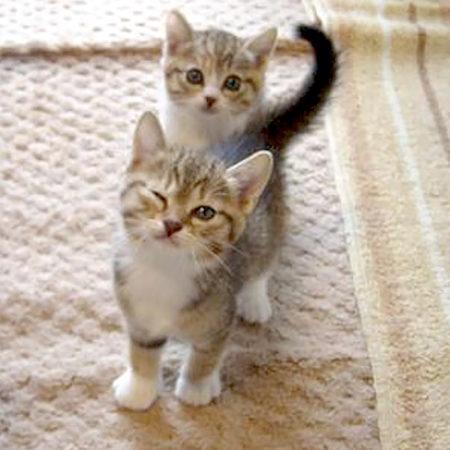 3 кошачьи привычки, которые легко объяснить