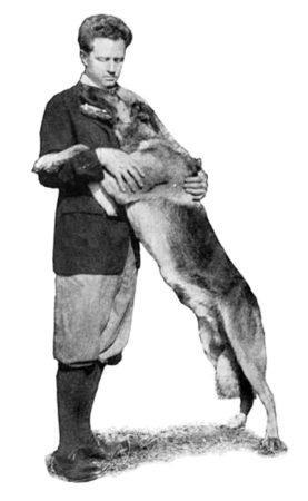 Легендарные собаки немого кино: две жизни овчарки по прозвищу «Твёрдое сердце»