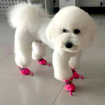 АлиЭкспресс для животных: купите вашей собаке ботинки