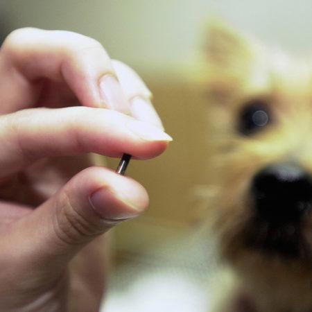 5 вопросов о микрочипах для собак